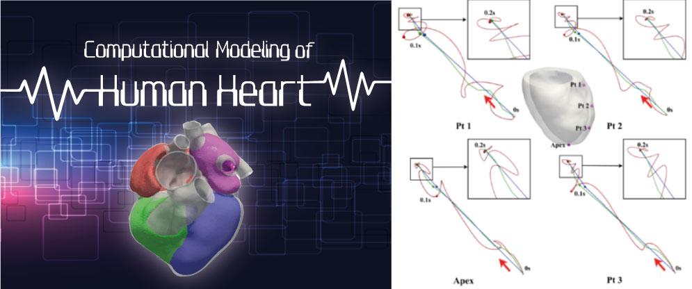 Computational modeling of human heart